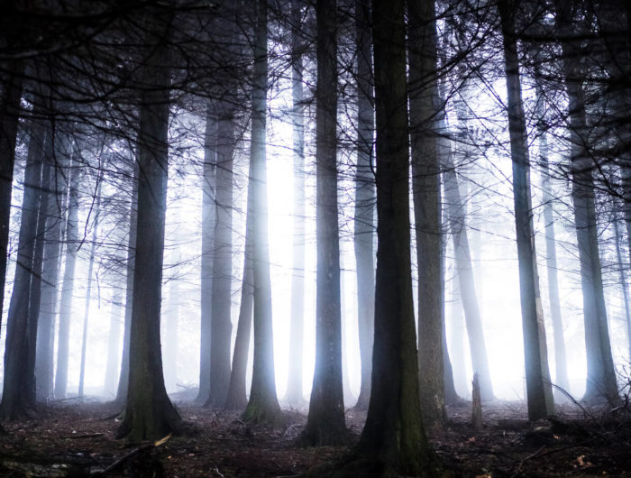 Eerie woods in the West country