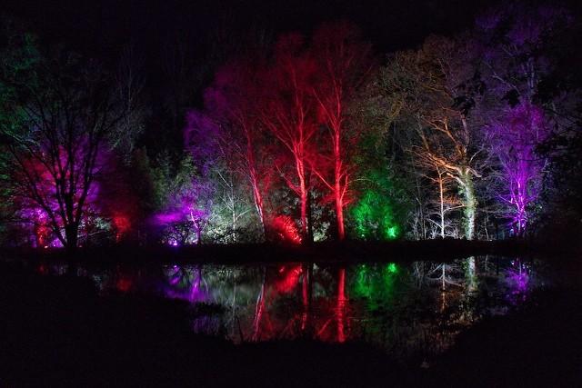 Lights illuminating the trees at Rosemoor