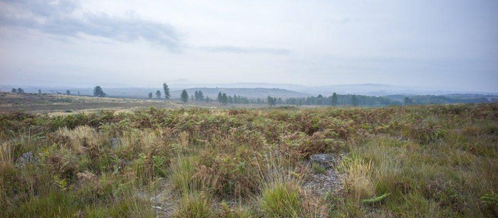 Hartland Moor