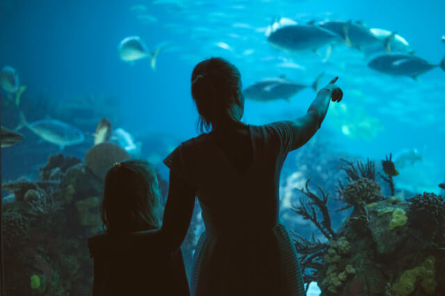 Child and woman in aquarium looking at fish