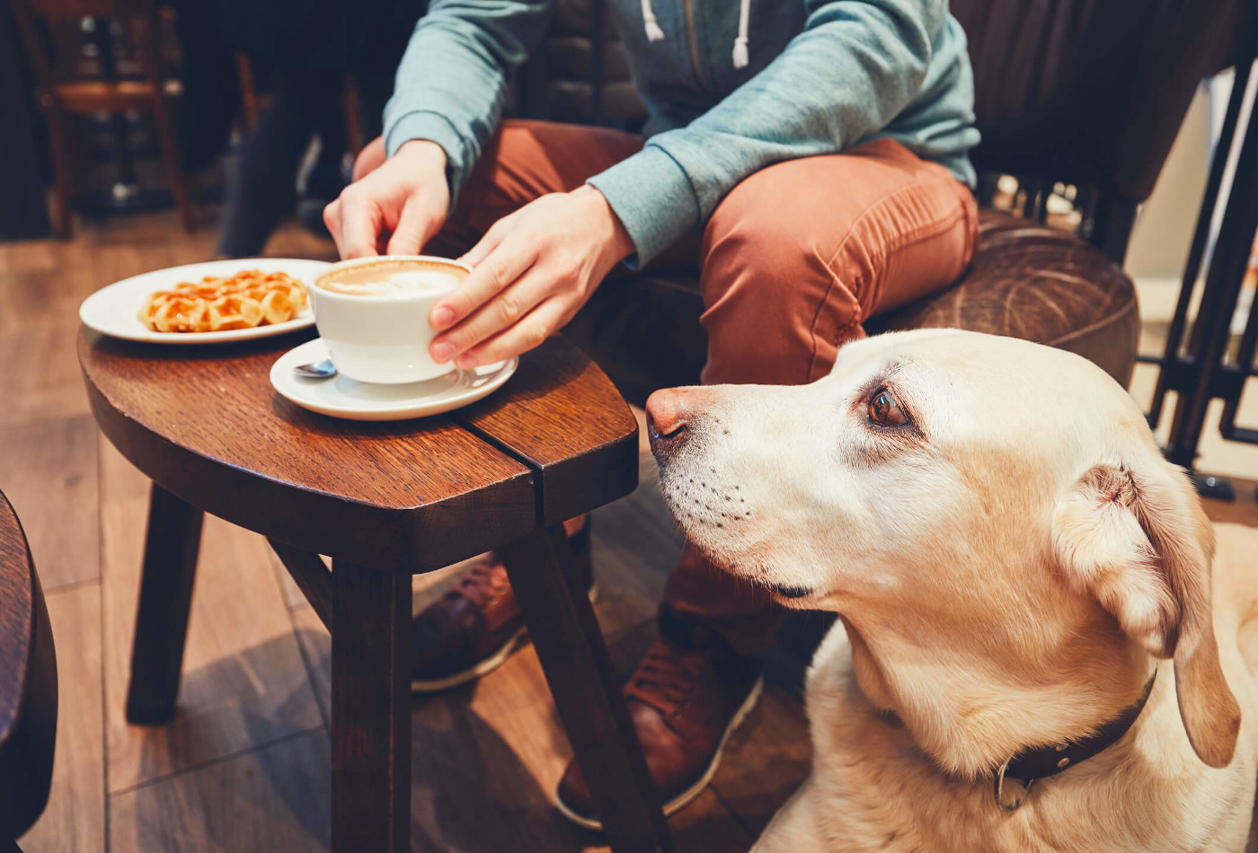 Dog sitting in pub watching owner eat waffle