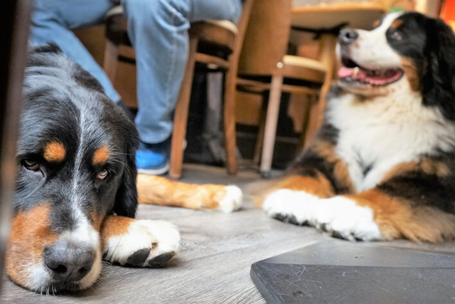 Dogs sitting on floor in pub