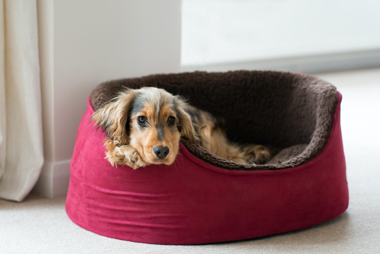 dog bed guest information folder