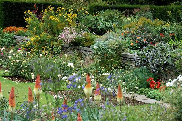 Flowers at Castle Drogo garden