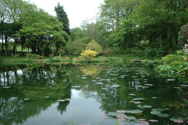 Lake at Marwood Hill Gardens