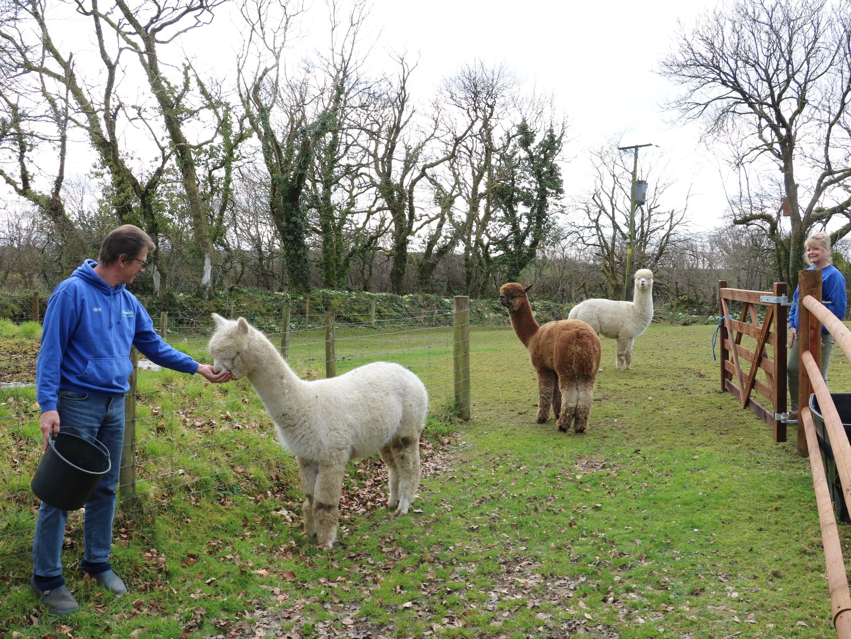 Meet the owners - feeding the alpacas