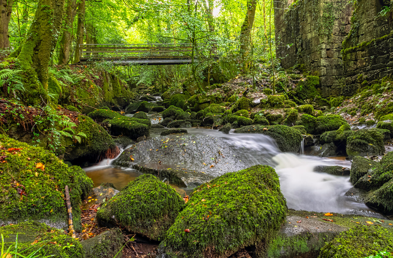 Kennal Vale - one of the Top 5 Spring Walks in Cornwall